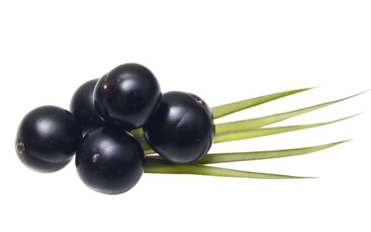 Açaí palm extract
